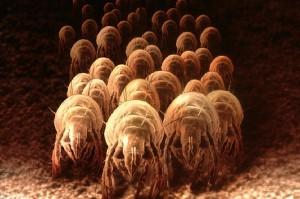 Микроскопические клещи, живущие в постельном белье, могут вызывать приступы ночной аллергии