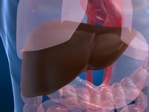 Ожирение печени приводит к дистрофическим изменениям в органе.